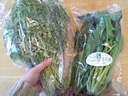 サラダからし菜とサラダほうれん草