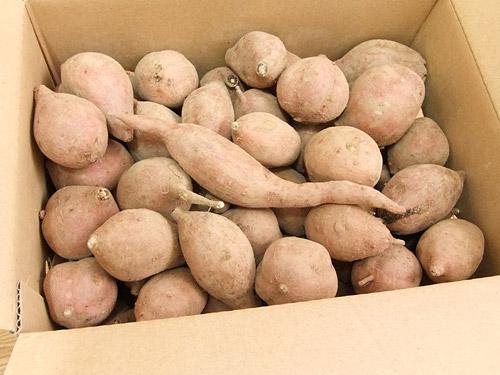 楽天市場 種子島観光物産館 安納芋