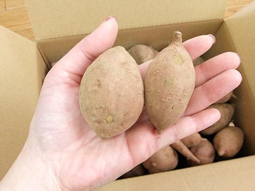 楽天市場 種子島観光物産館 安納芋 サイズ