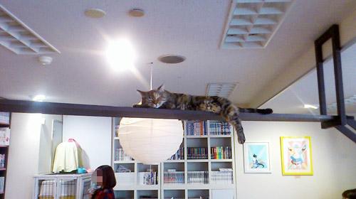 猫家 キャットウォーク