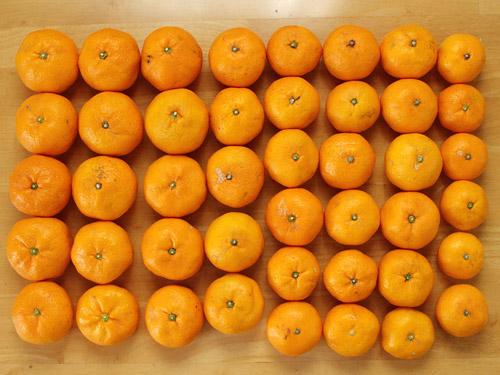 みさき果樹園 みかん 5kg個数