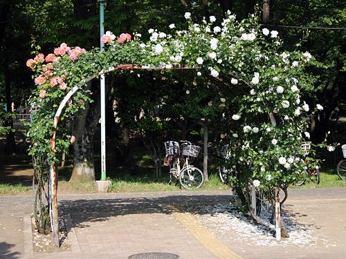 与野公園バラ園 バラのアーチ