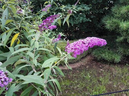 川口市立グリーンセンター 紫の花